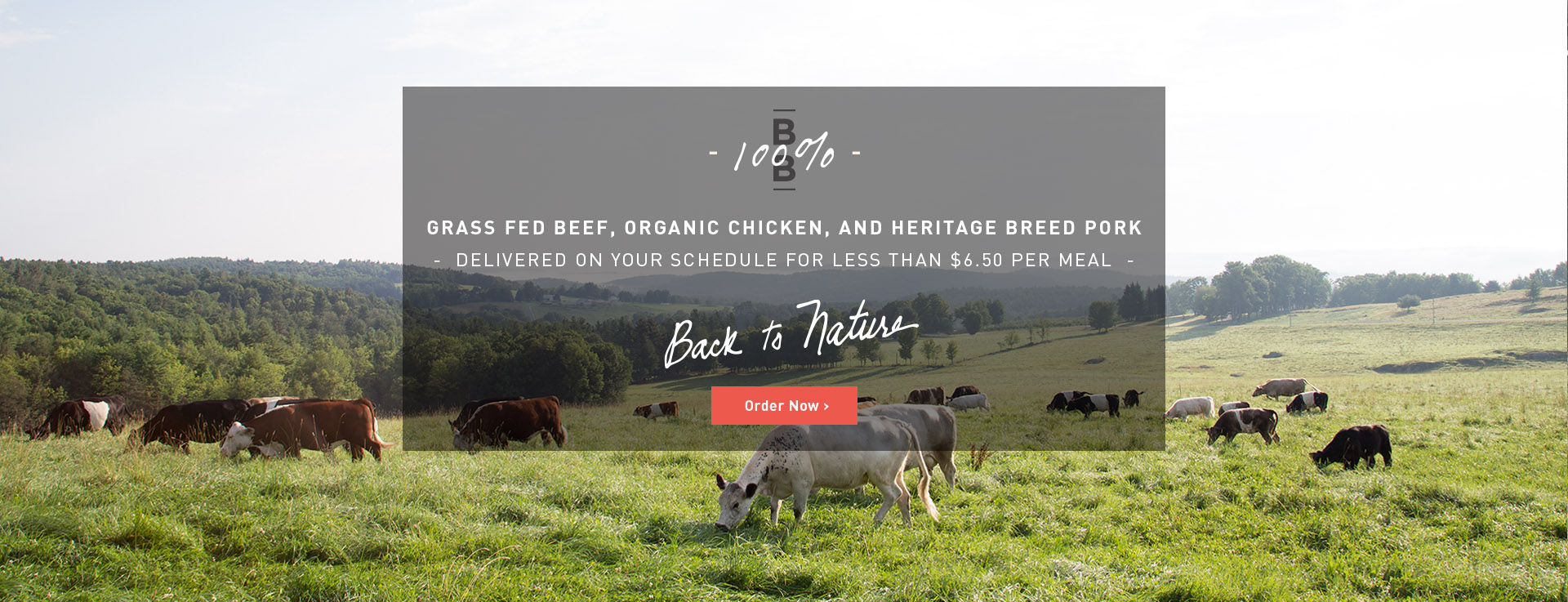 Grass Fed Cattle